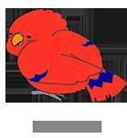 いろんな種類の小鳥たち